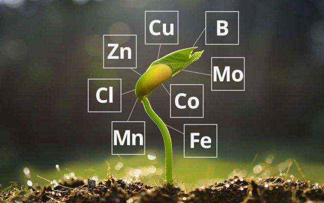 Các nguyên tố vi lượng