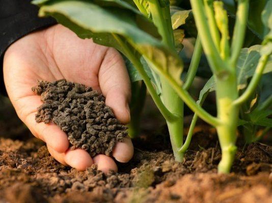 """Phân hữu cơ vi sinh đang là sự lựa chọn hàng đầu trong mô hình sản xuất nông sản """"sạch"""""""