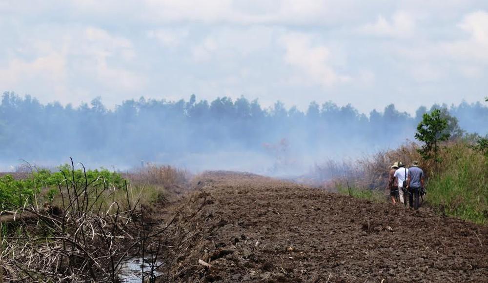 Có nhiều yếu tố ảnh hưởng đến vùng đất than bùn tự nhiên