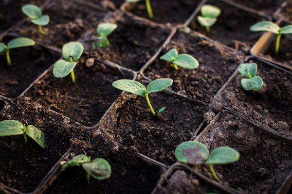 Đất mùn có nhiều vai trò trong nông nghiệp